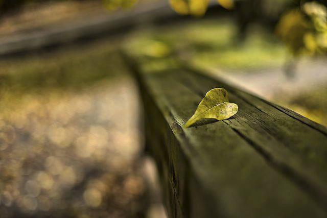 My heart in autumn by Guillermo Hakim