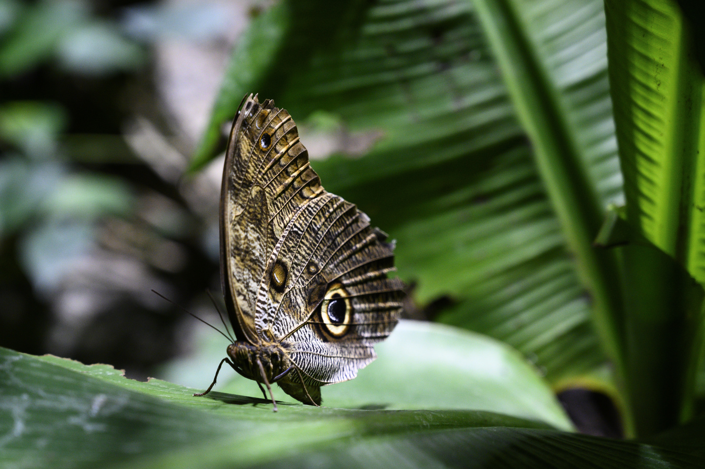 banana butterfly by Dennis Billstein