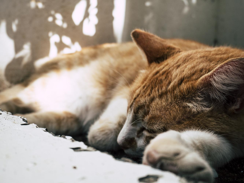Sleepy Cat by Dennis Billstein
