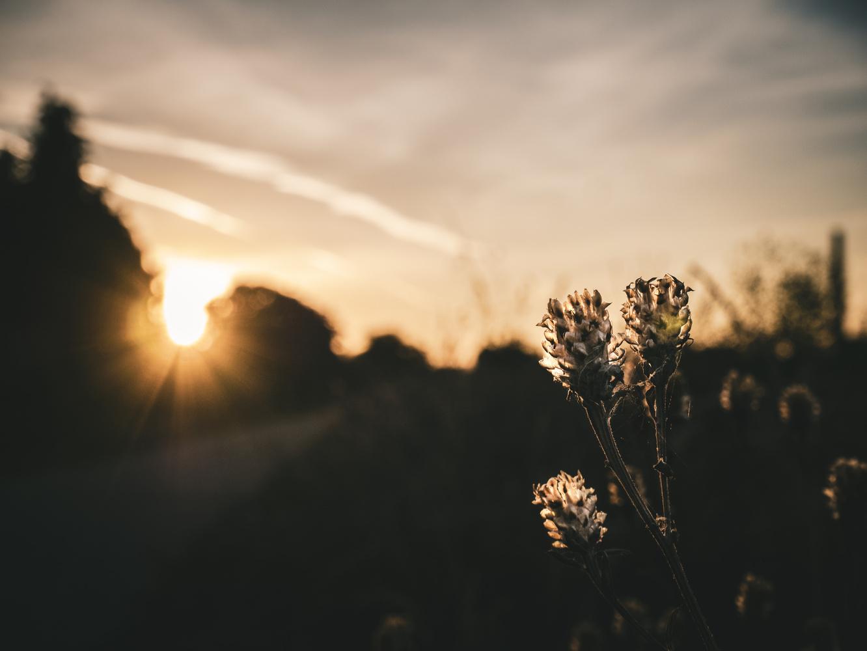 Flower in Sunset by Dennis Billstein