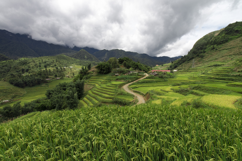 A green paddy field in Sapa, Vietnam by Léonard Rodriguez
