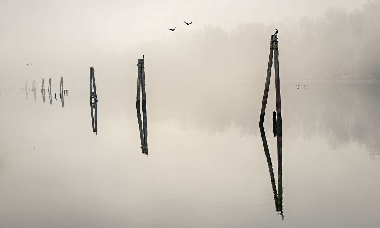 Sauvie Island Fog by Hudson Henry