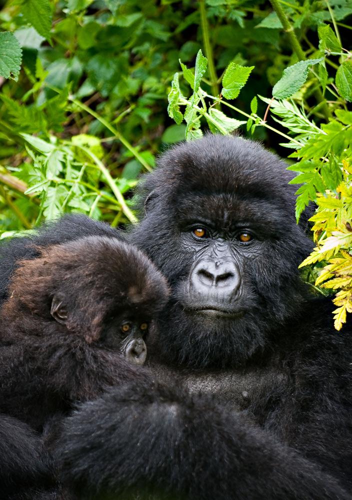 Precious Few (Rwanda) by Hudson Henry