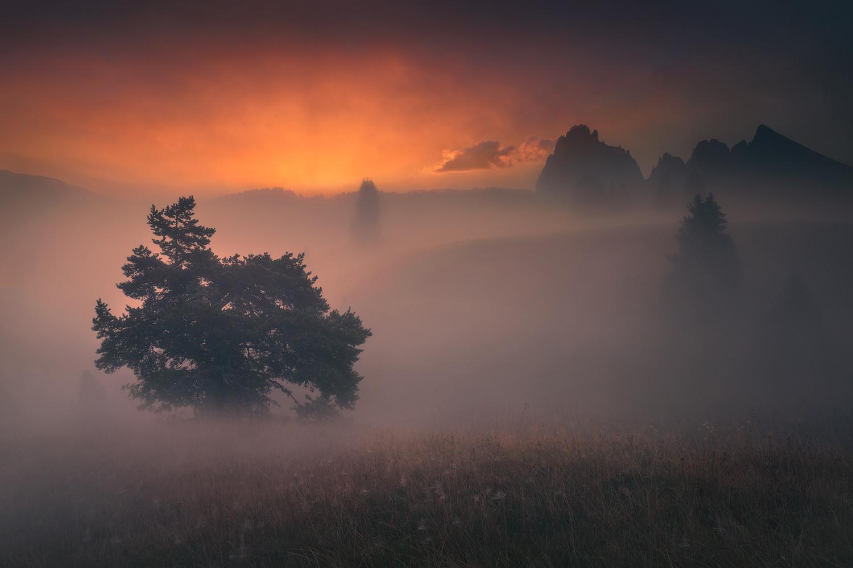 Veil by Radisa Zivkovic