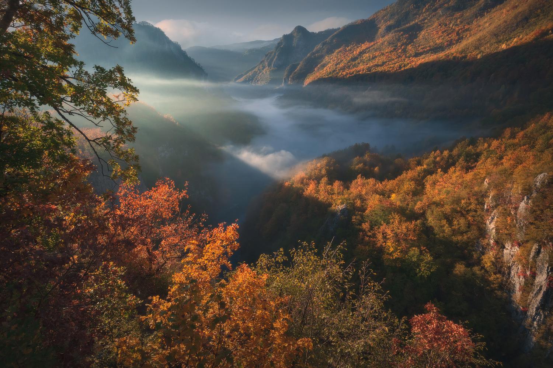 Autumn rhapsody II by Radisa Zivkovic