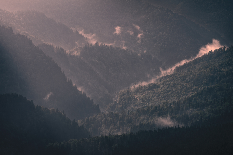 Carpathian jungle by Radisa Zivkovic