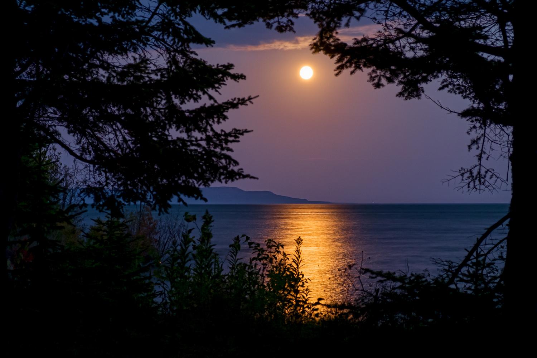 Full Moon through trees by Gregor McDougall