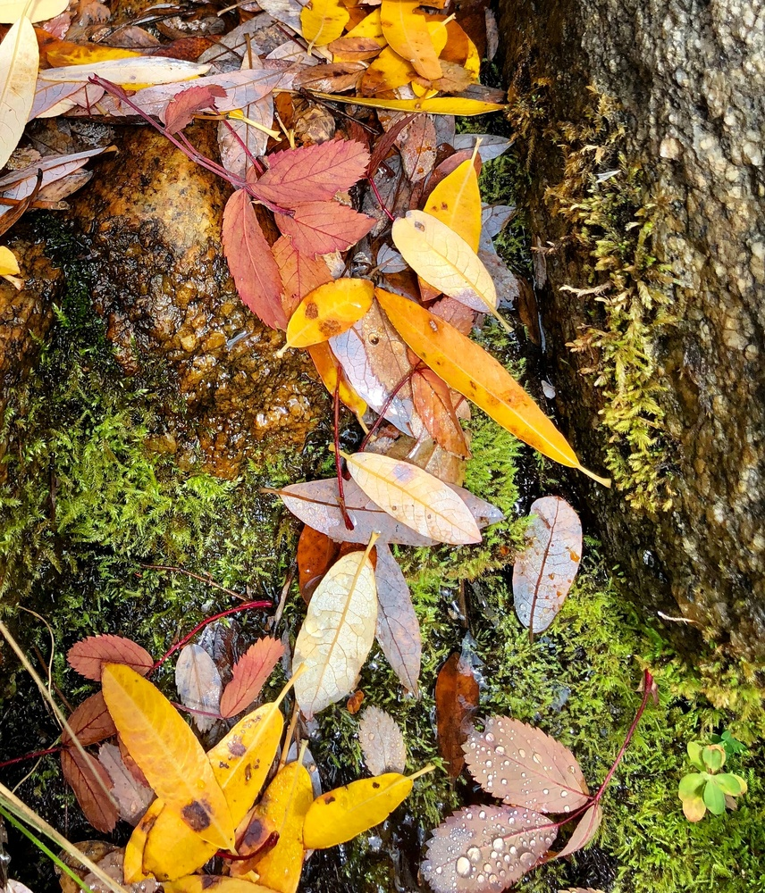 Burst of Fall by Graf Kirk