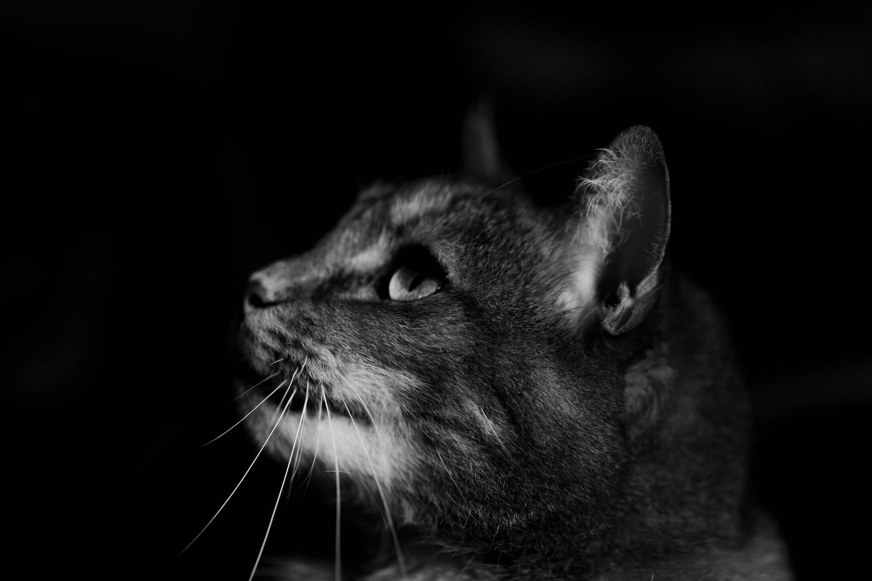 Honey The Cat by Stephen Simons