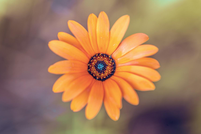 Orange Flower by Stephen Simons