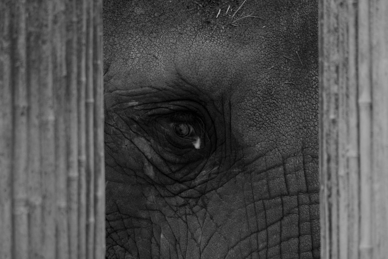 Behind Bars by Emanuel Schimpfössl