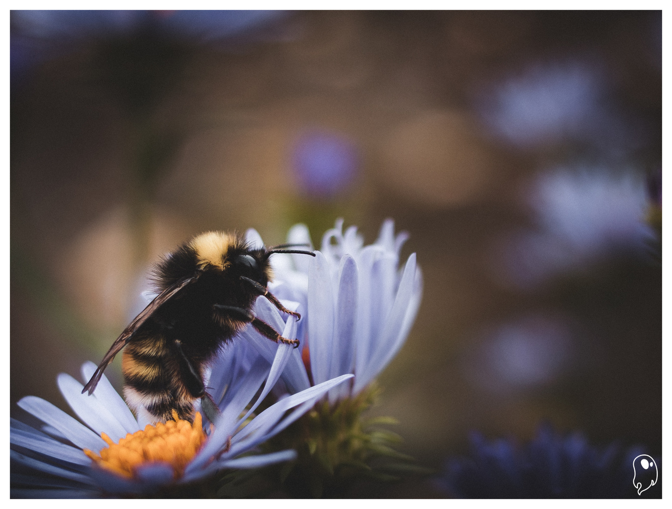 Buzzy Bee by Logan Johnson