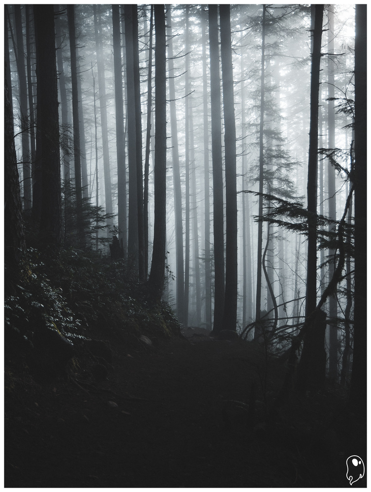 Light Beams and Dark Forests by Logan Johnson