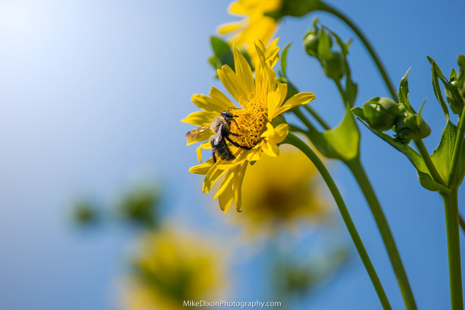 Bee Clouds by Mike Dixon