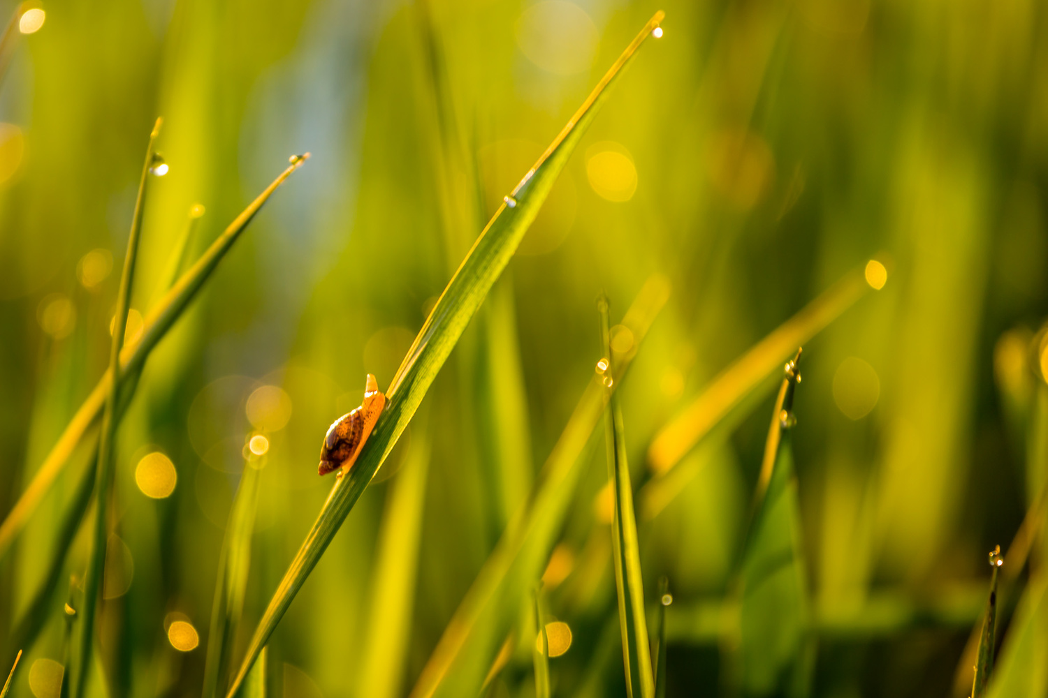 Morning Snail by Mike Dixon