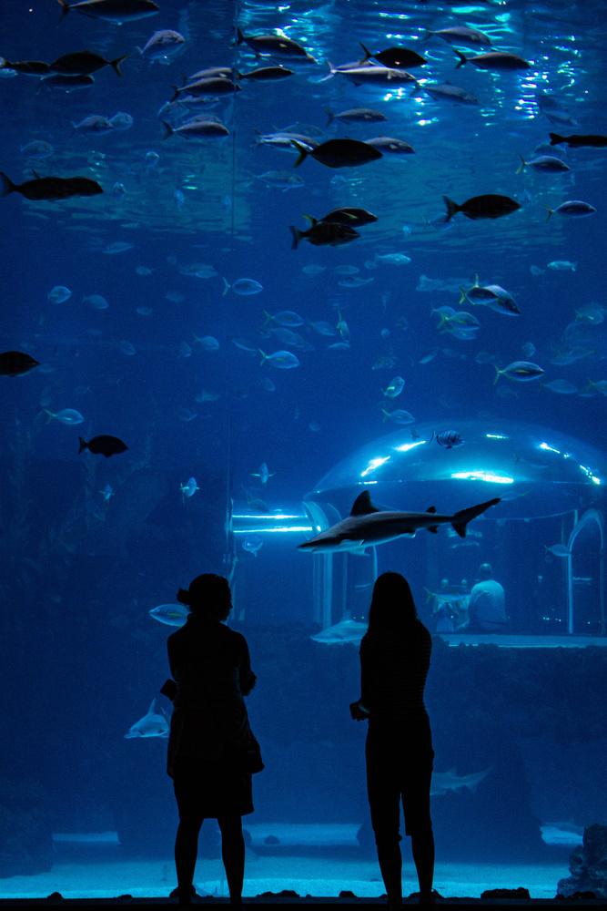 Aquarium silhouettes by Thomas Gehrke