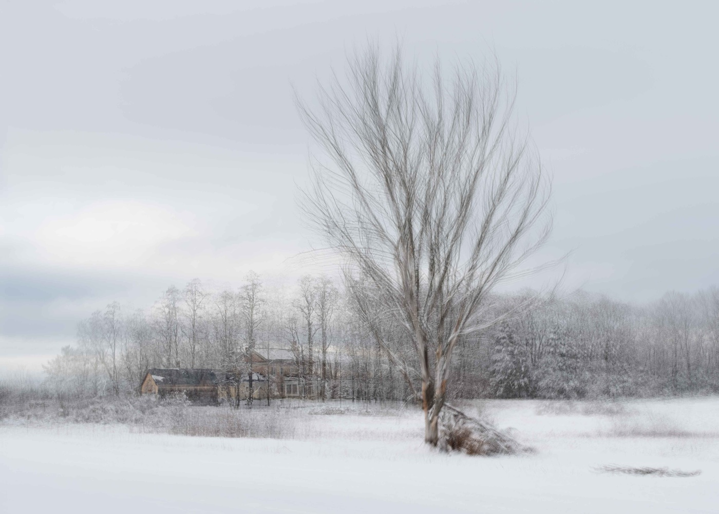 Winter in Catamount country by Alan Brown