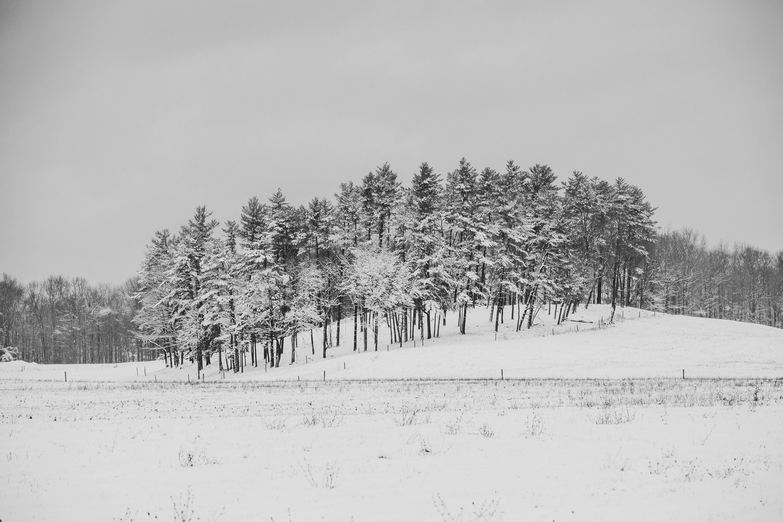 Treeline by Alan Brown
