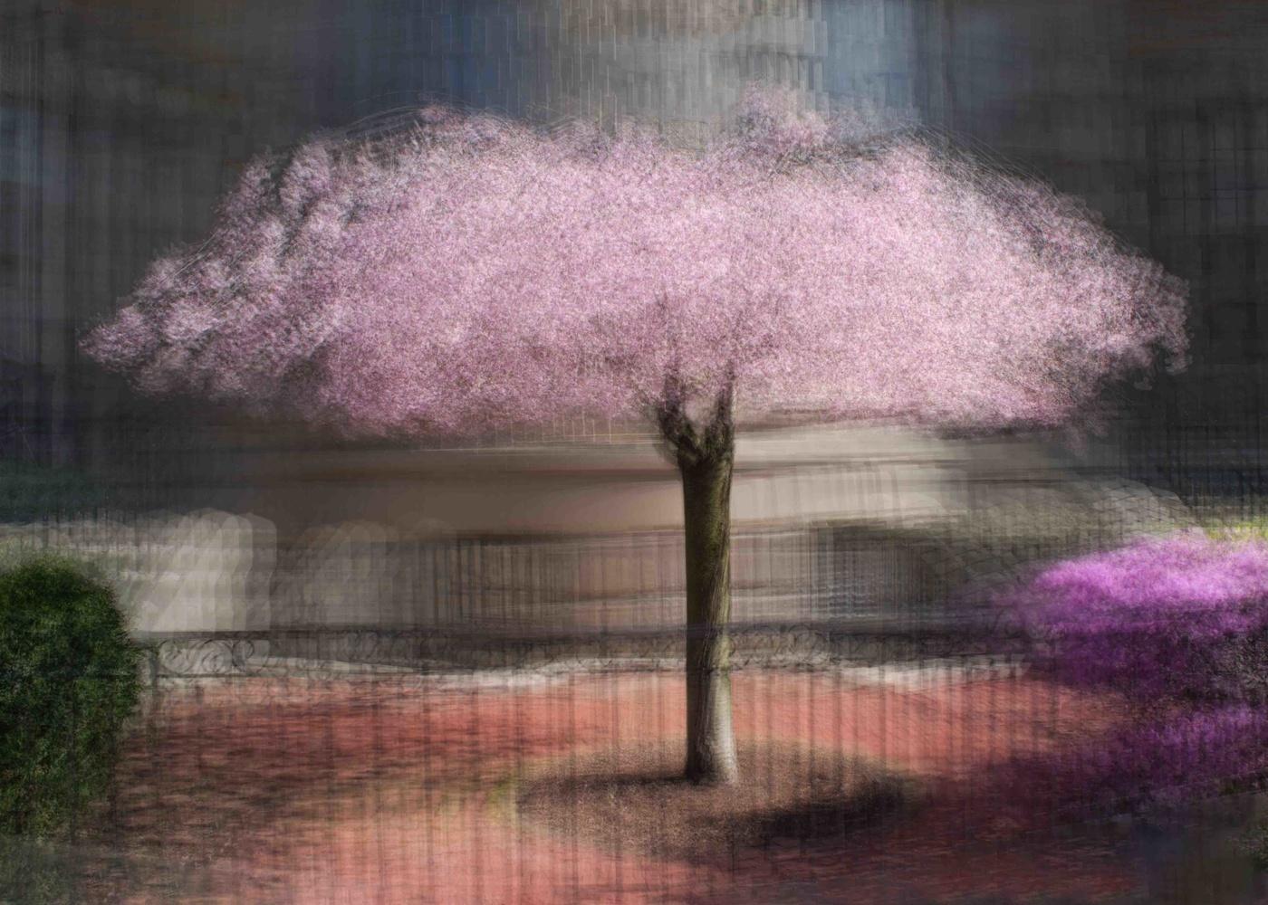 Boston garden by Alan Brown
