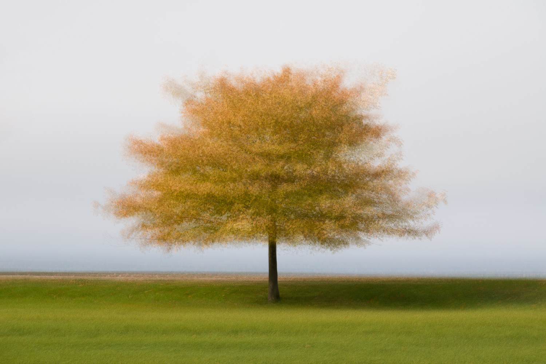 Lakeside Fall by Alan Brown