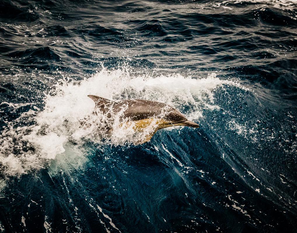 on a breaking wave by San Nguyen