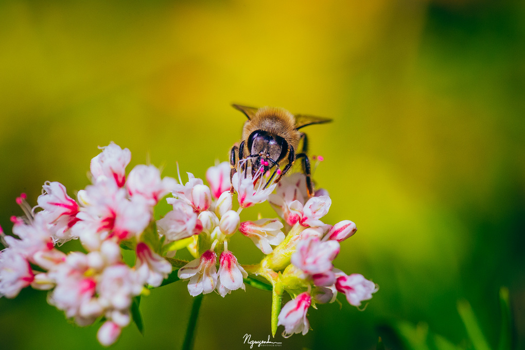 portrait of a bee by San Nguyen