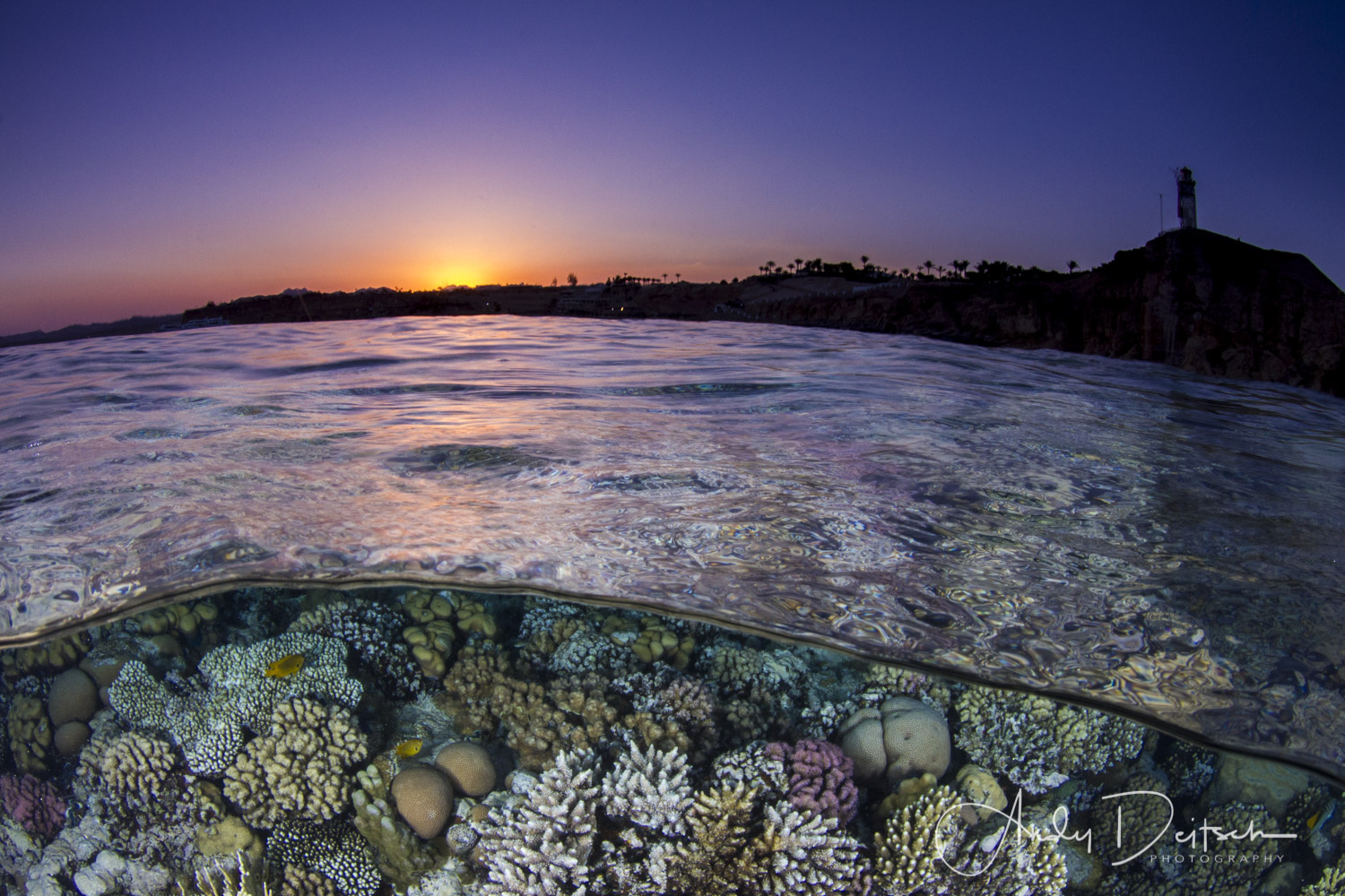 Sunset on the Reef by Andy Deitsch