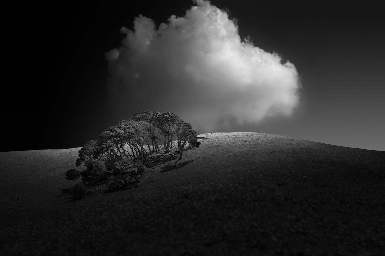 Moonah ii by Damian Guiney