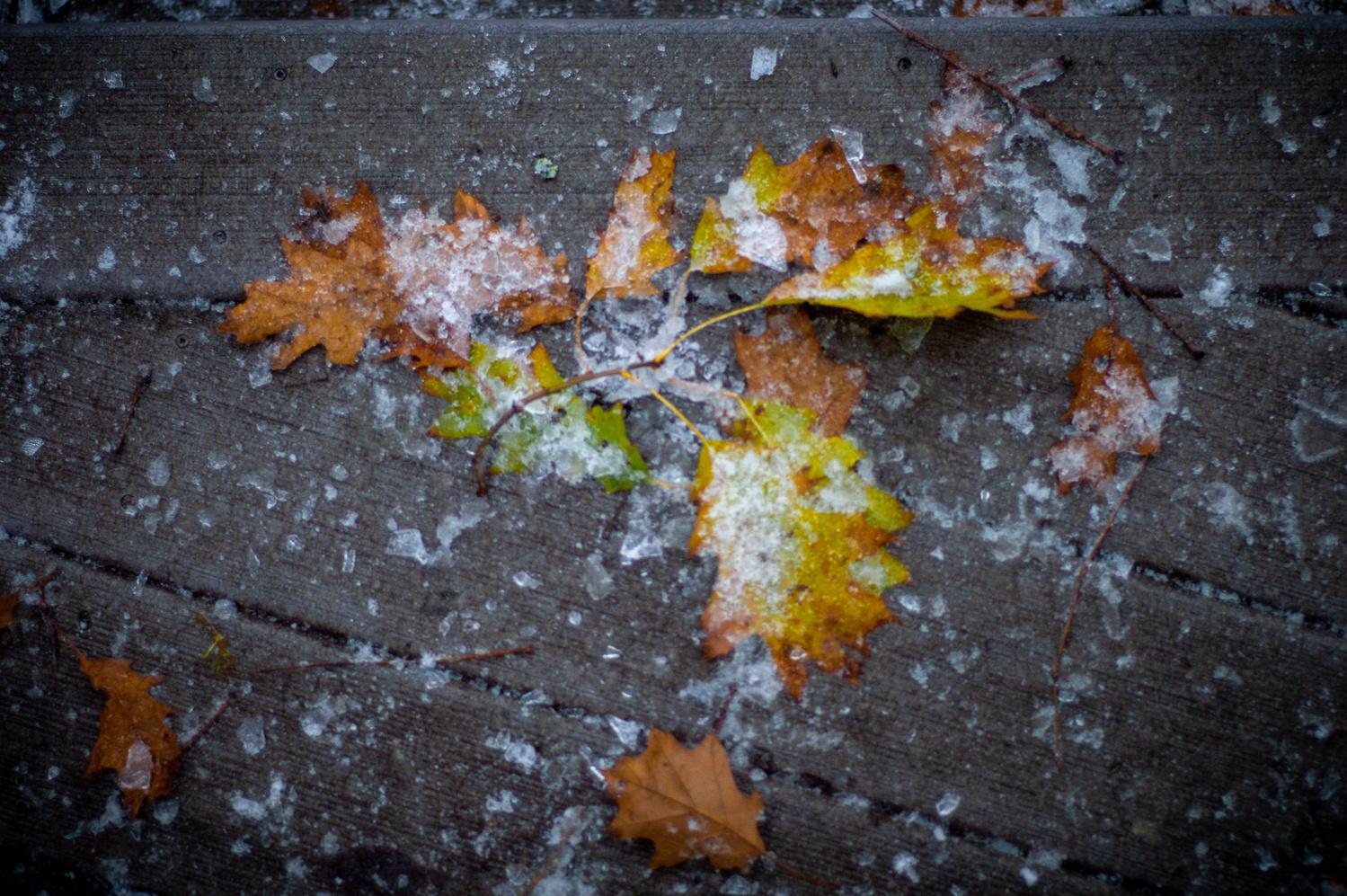 Frozen Fall by Ryan Merk