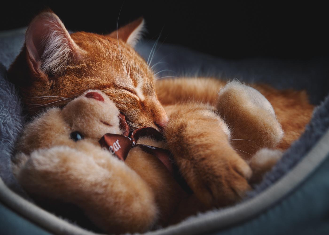 never sleep alone by Patrick Illhardt