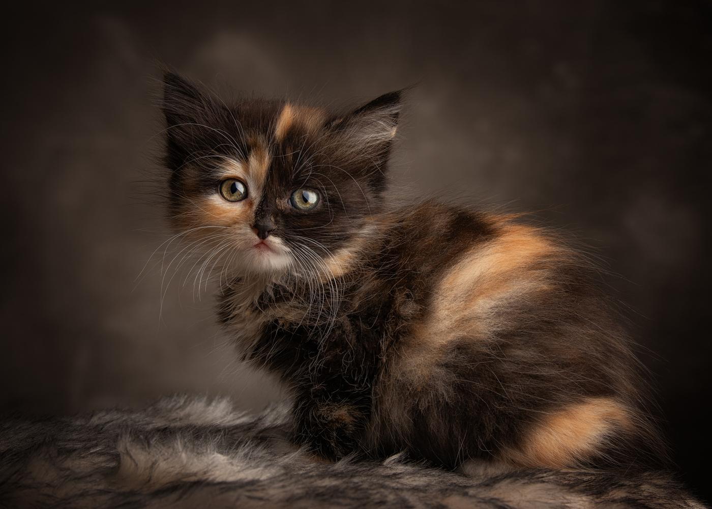 Cat Nr. 3 by Patrick Illhardt