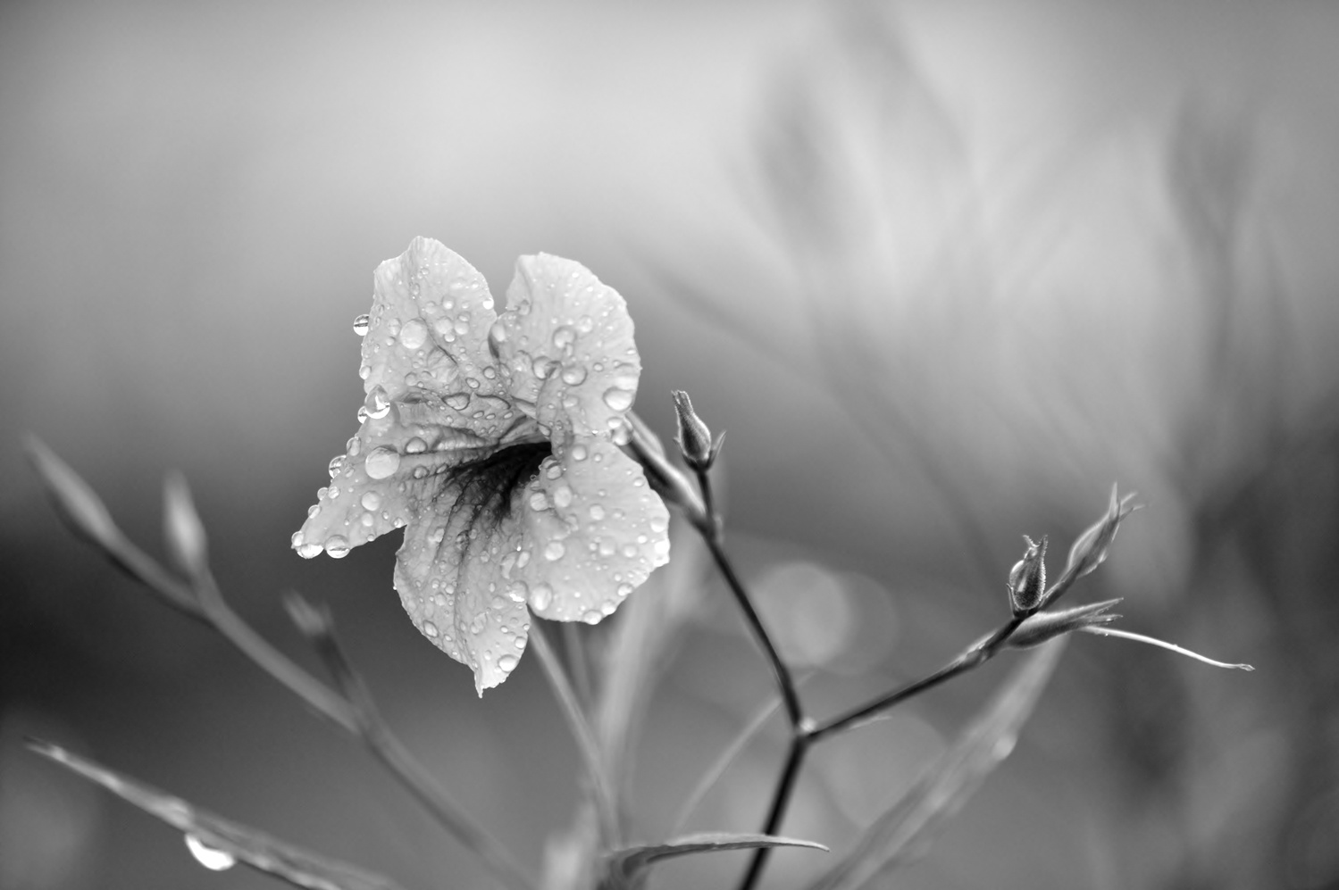 Flower Droplets in Cabo by Thomas Herbst