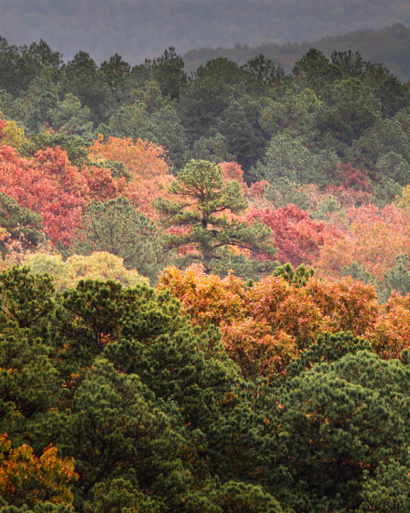 Treebeard by Thomas Herbst