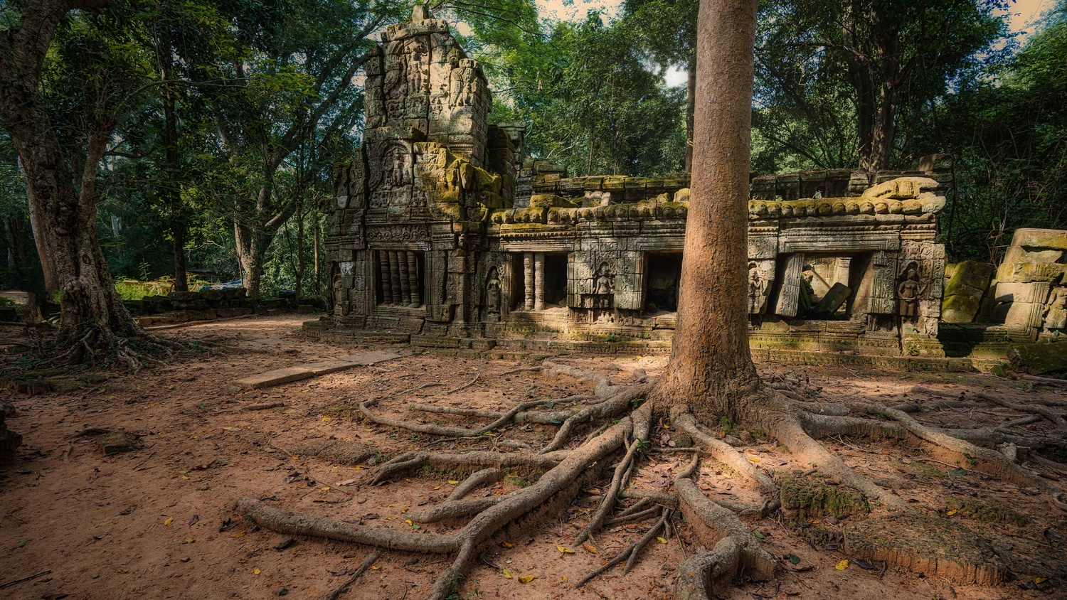Roots in Siem Reap by Dayne Farley