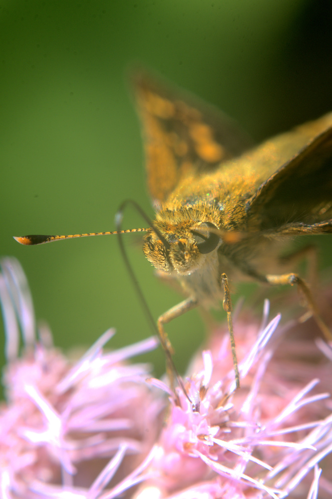 Insect on Flower by Dan Seefeldt
