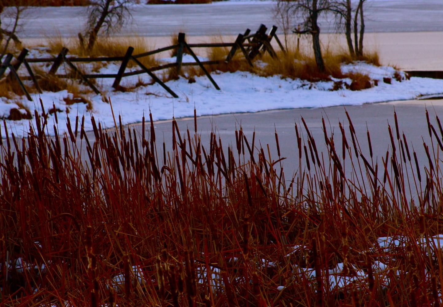 Pondside by Paddy Hackett