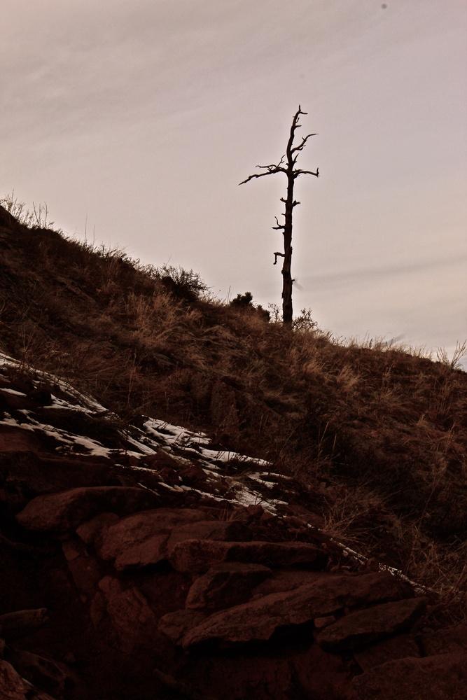 Tree on slanted hill by Paddy Hackett