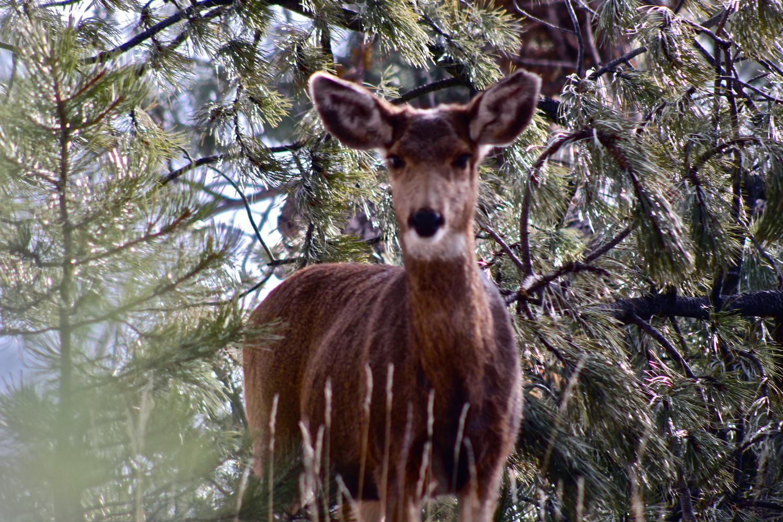 Deer by Paddy Hackett