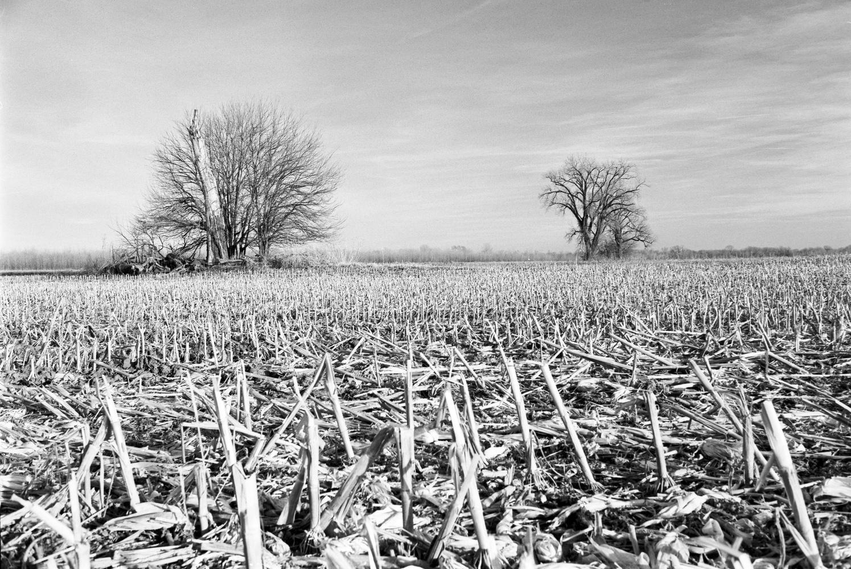 Corn Field in Winter by Richard Keeling