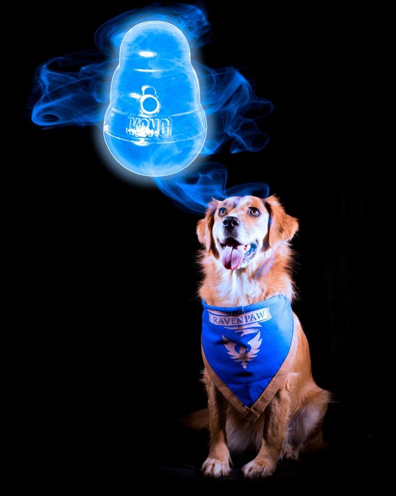 Harry Potter-style Favorite Dog Toy Patronus by Logan Baker