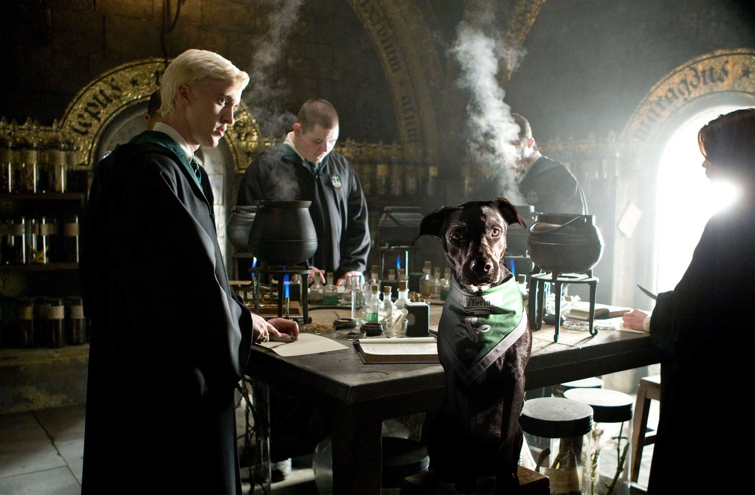 Placing a family pet into a Harry Potter scene. by Logan Baker