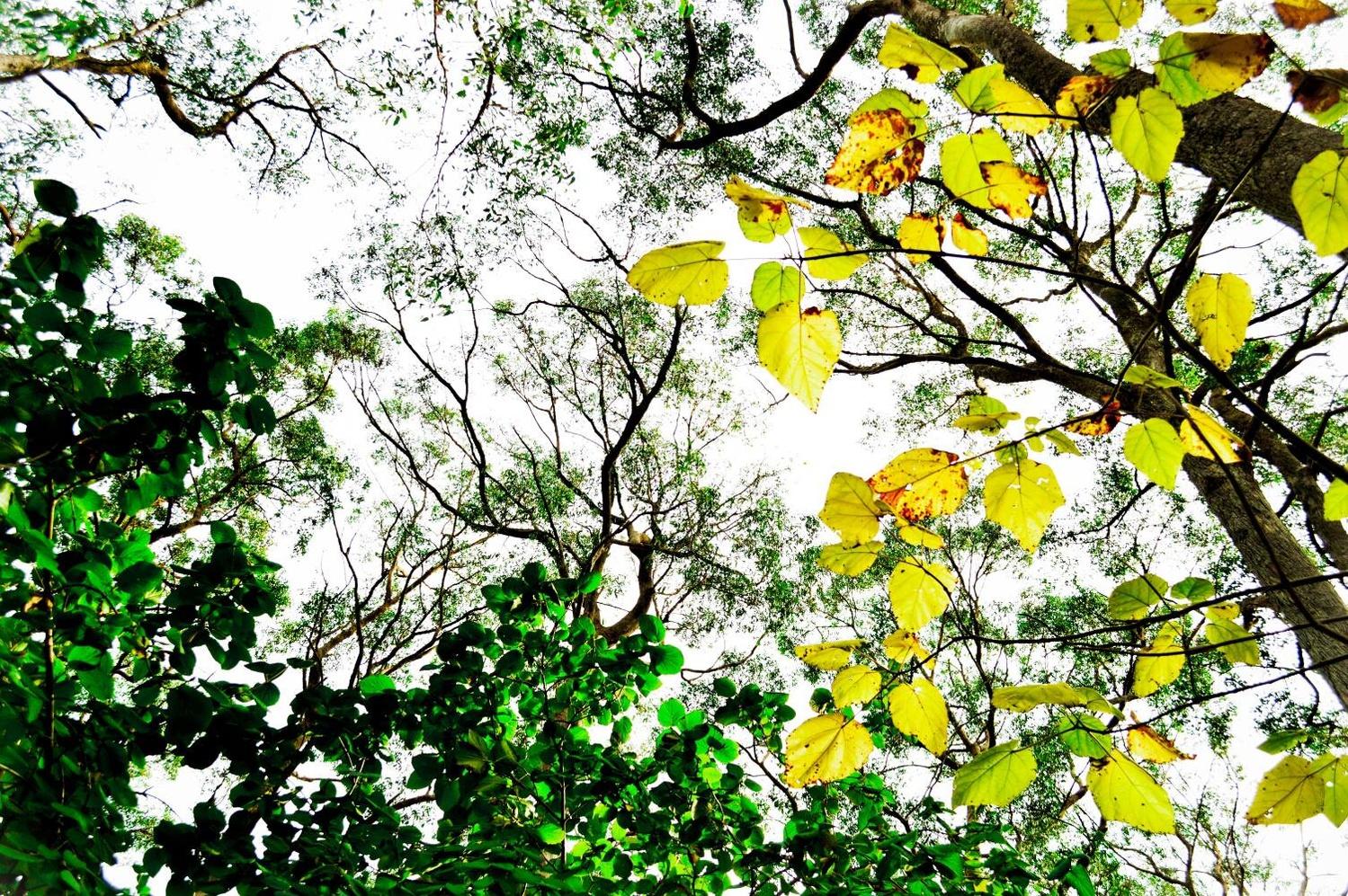 Forrest Sky by Ashley Hoff