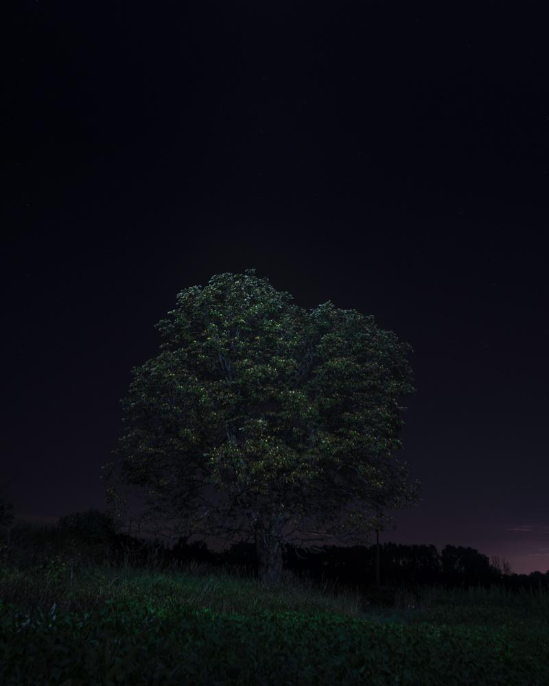 Tree of light by GARY CUMMINS