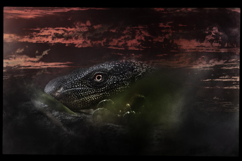 Crocodile Monitor by Julian Wood