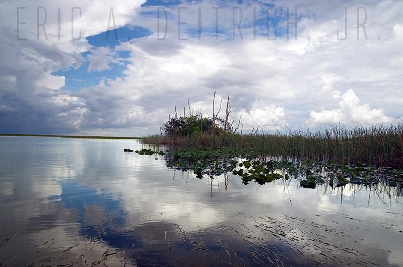 Everglades by Eric Deitrich