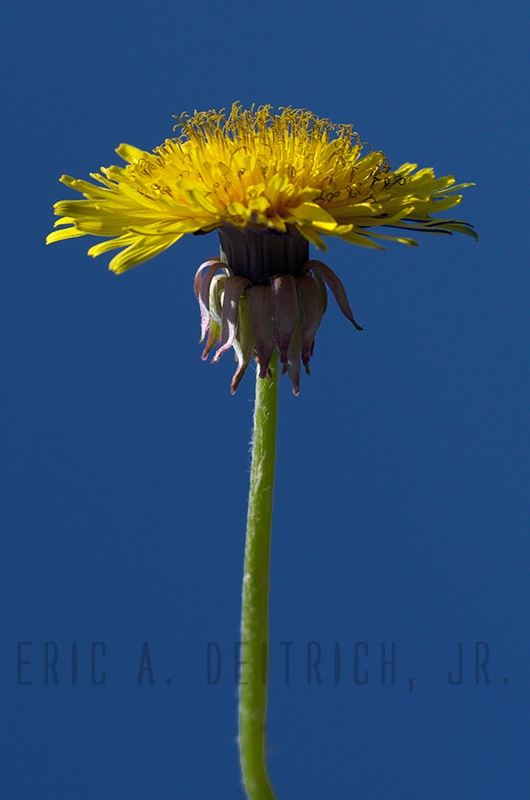 Beautiful Weed by Eric Deitrich