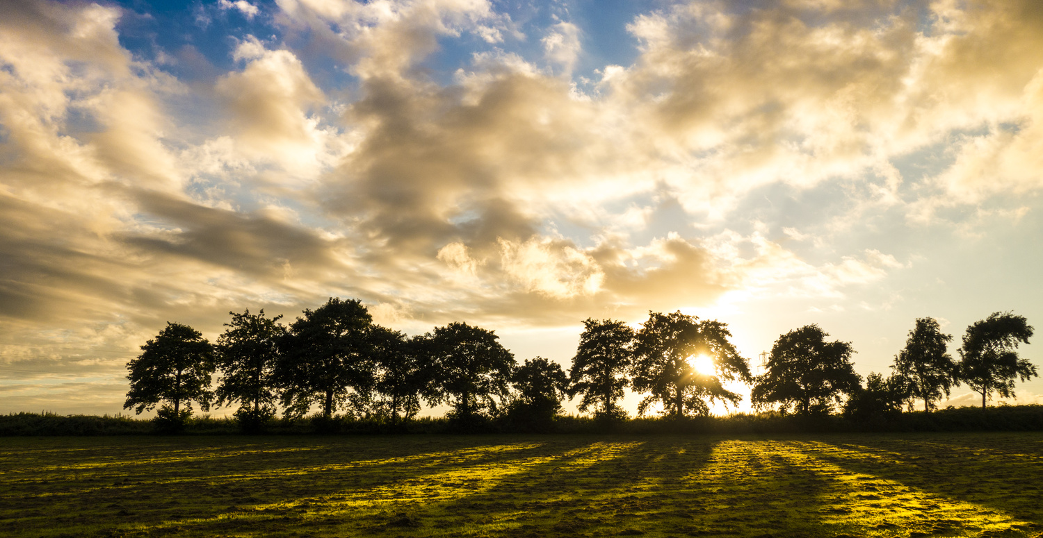 Sunset through the trees by Peter Sweeney