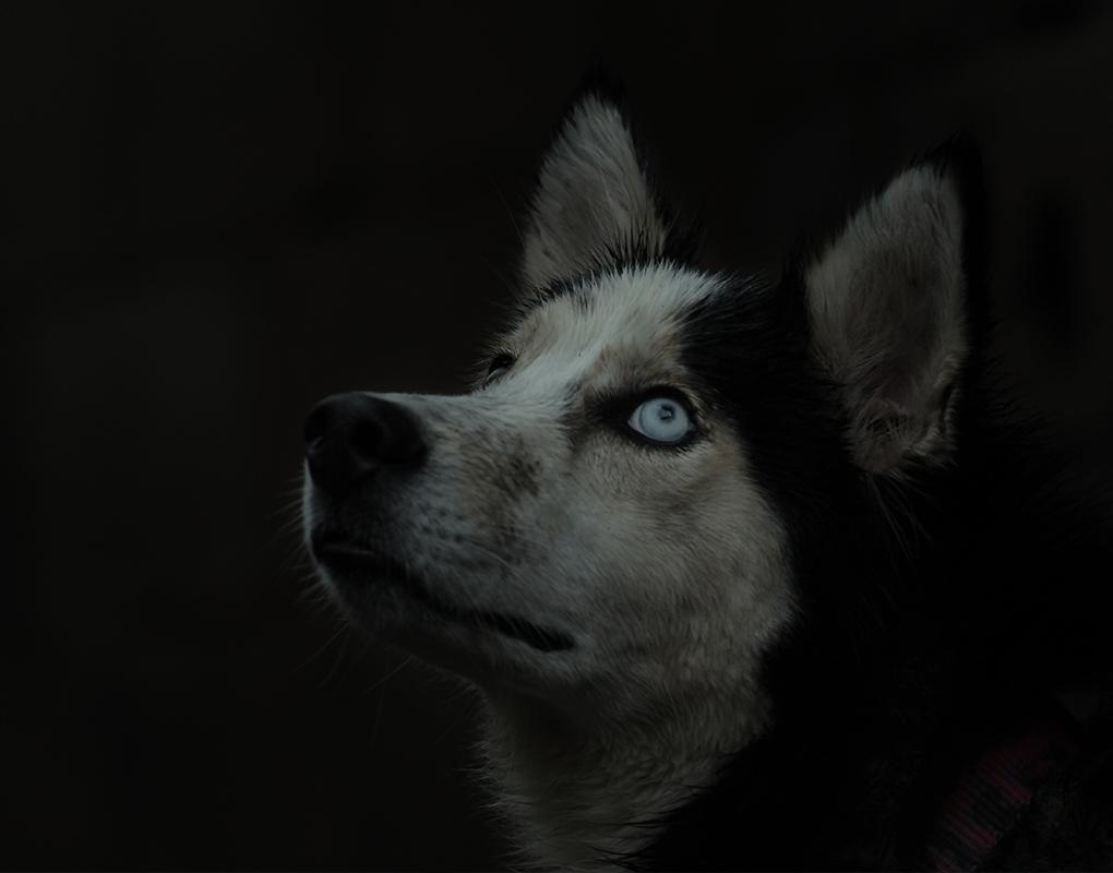 My dog Kenay! by Nichott Leon