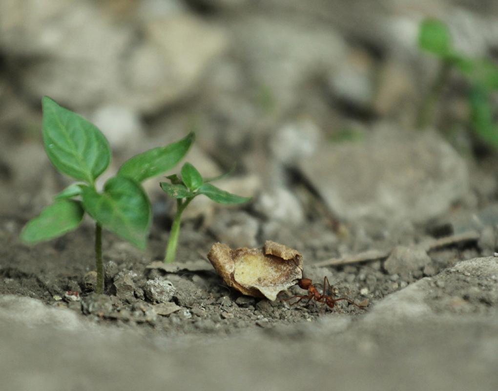 Ant wonking... by Nichott Leon