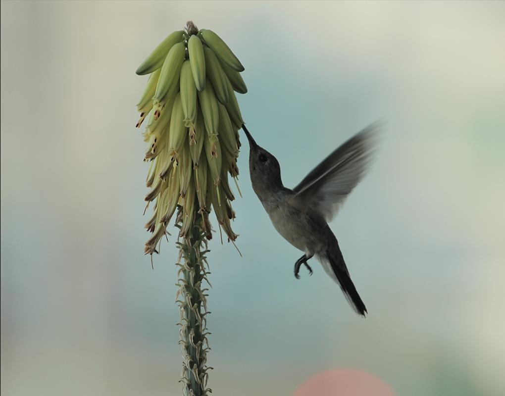 A little hummingbird! by Nichott Leon